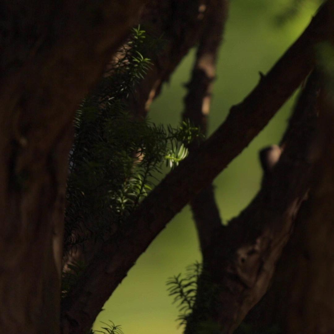 Still Frame from Video